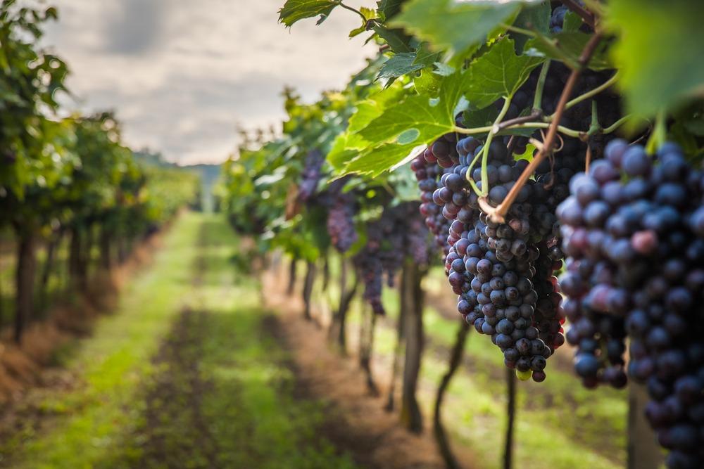 Garcon flat wine
